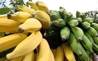 Farinha de banana verde é esperança para diabéticos (Foto: Rede Globo)