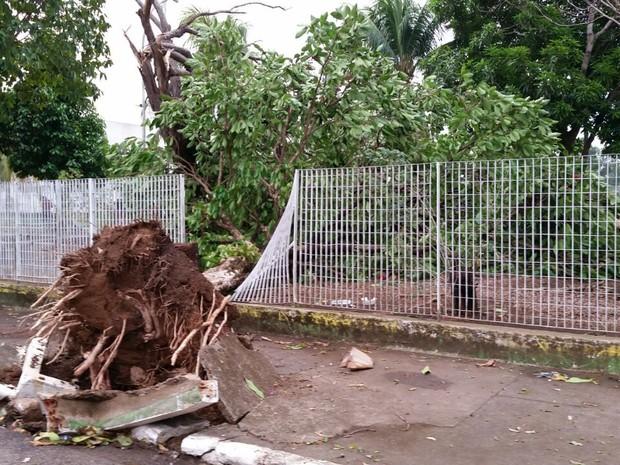 Moradores encontraram várias árvores caídas em Porto Velho (Foto: Reprodução/ WhatsApp)