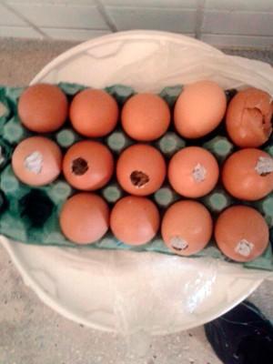 Ovos estavam recheados com maconha; droga foi apreendida e mulher presa em flagrante  (Foto: Divulgação/Coape-RN)
