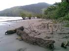 Fiscais de São Sebastião encontram  barreira de óleo em mangue