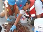 Cientistas descobrem grande recife de coral na foz do Rio Amazonas
