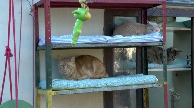 Casa foi adaptada para os gatos (Foto: Reprodução/RBS TV)
