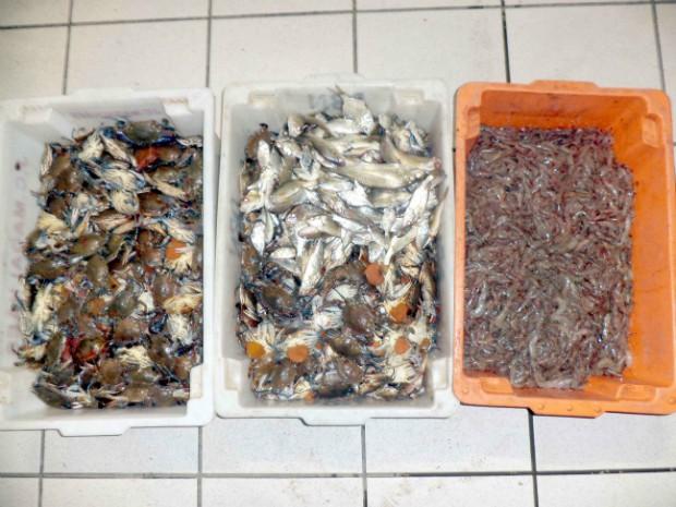 Siri azul, peixes e camarão irregulares para venda foram apreendidos na Ilha das Caieiras (Foto: Divulgação/ Polícia Ambiental)