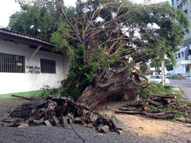 Árvore caiu ao lado da Praça das Muriçocas (Foto: Walter Paparazzo/G1)