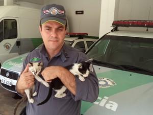 Gatos foram encaminhados para uma ONG (Foto: Divulgação/ Polícia Ambiental)