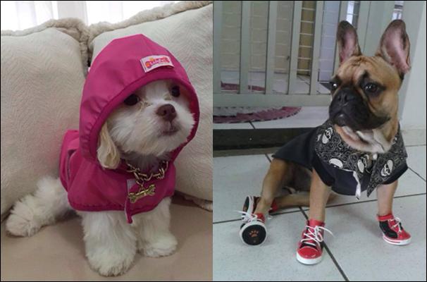 Telespectadores enviaram centenas de contribuições para o Mania de Cão (Foto: Marketing/TV Fronteira)
