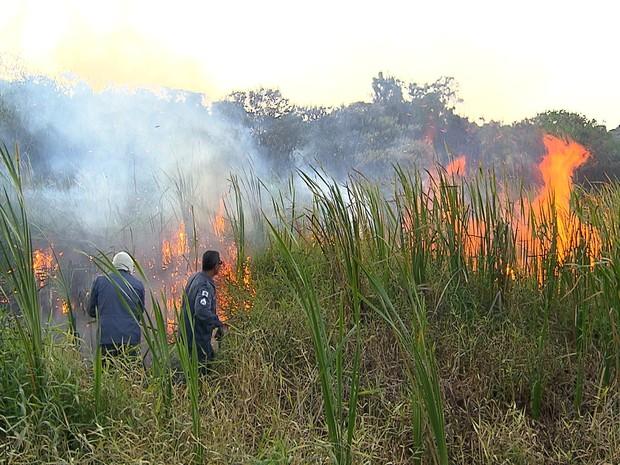 Chamas queimam área de vegetação na orla da Lagoa da Pampulha.  (Foto: Reprodução/TV Globo)