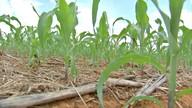 Estudo mostra os efeitos positivos da adubação sistêmica do solo