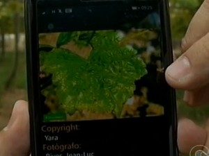 Aplicativo ajuda produtores rurais em Petrolina (Foto: Reprodução/TV Grande Rio)