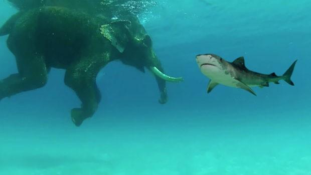 Falso encontro entre elefante e tubarão criou polêmica na web (Foto: Reprodução/YouTube/Billschannel)