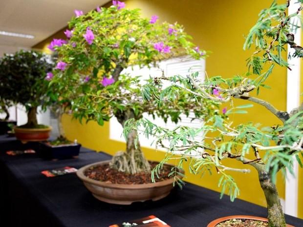 Programação envolve exposição e oficinas de bonsai (Foto: Agência Sebrae)