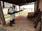 Limeira atinge 6 mil casos de dengue e mortes suspeitas sobem para oito