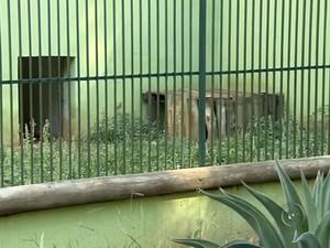 Mortes de nove animais esvaziam zoológico em Araçatuba (Foto: Reprodução/TV TEM)
