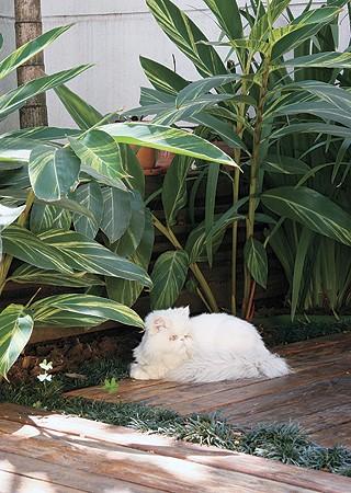 Se o seu animal tiver acesso ao jardim, cuidado com plantas  tóxicas (Foto: Shutterstock)