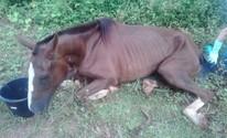 Égua resgatada com sinais de maus-tratos morre em Tupaciguara (Polícia Militar/Divulgação)