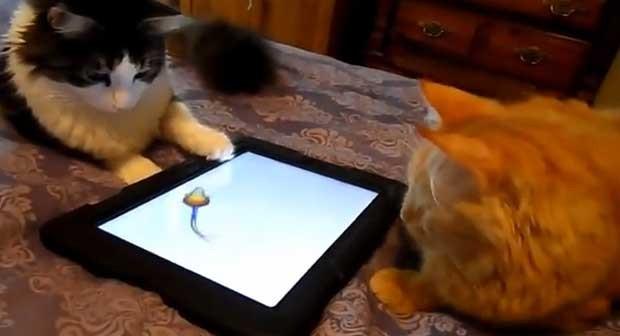 Felinos disputam game de rato (Foto: Reprodução/YouTube/Tigerpixie)