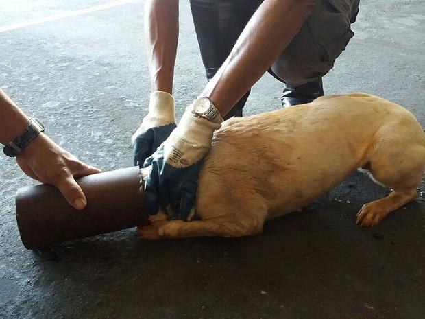 Cano foi retirado sem machucar o animal (Foto: Corpo de Bombeiros/Cedida)