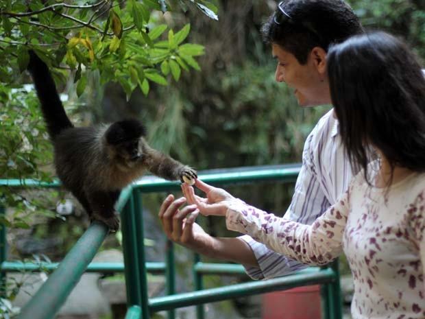 Animais atraem na Fonte dos Amores (Foto: Filipe Martins/ G1)
