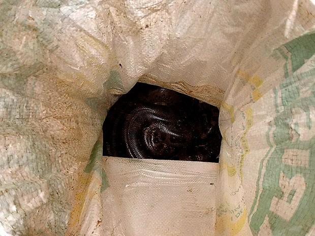 Morador encontra cobra sucuri na porta de casa (Foto: Ivanildo Santos/ TV Bahia)