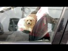 Vídeo mostra cães trancados em carro; calor era de 28ºC em Cabo Frio