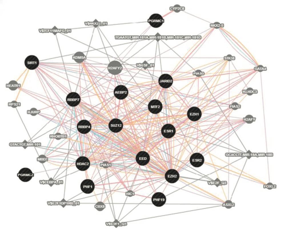 Expressão do complexo genético que foi encontrada como causa do transtorno (Foto: Peter Schmidt, M.D., NIMH., David Goldman, M.D., NIAAA)