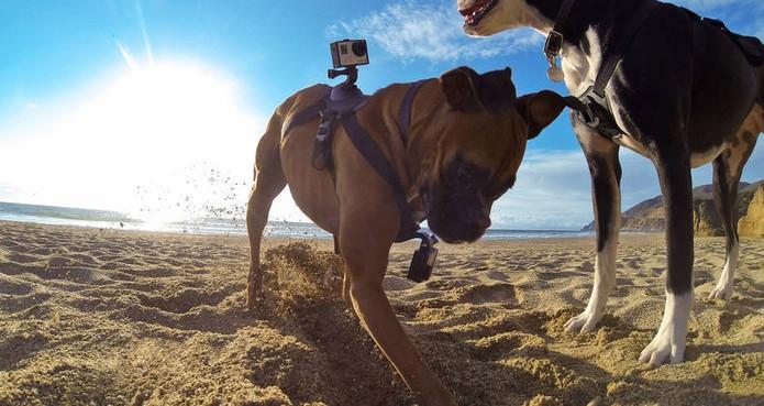 """O Fetch, da GoPro, permite que se veja """"através dos olhos do cachorro"""" (Foto: Divulgação/GoPro)"""