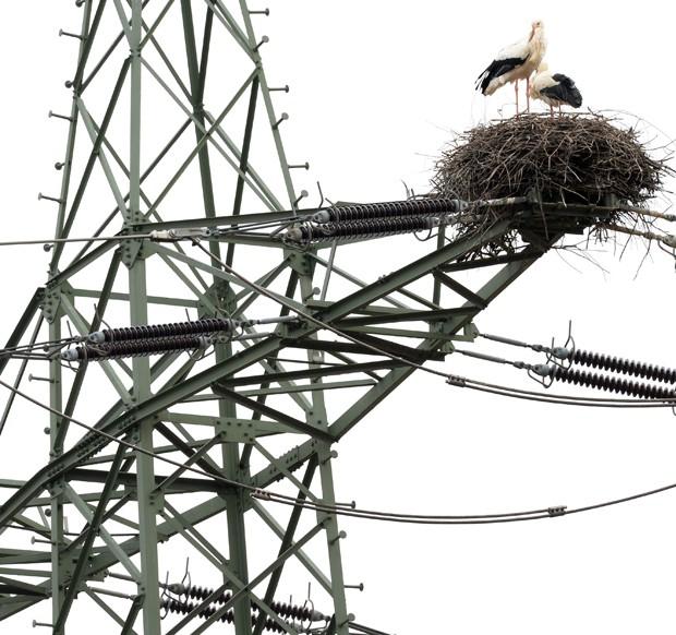 Casal 'aventureiro' fez ninho em cima de torre de eletricidade (Foto: Patrick Seeger/AFP)