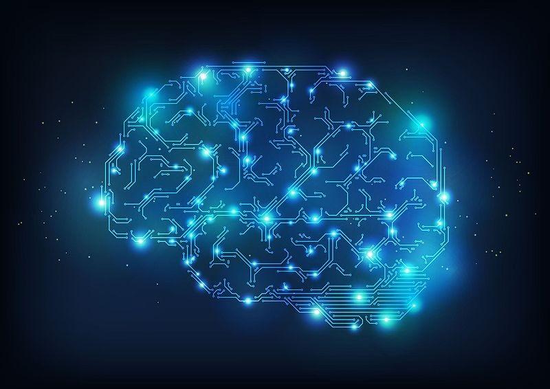 Cérebro (Foto: Martin420/ Wikimedia Commons)