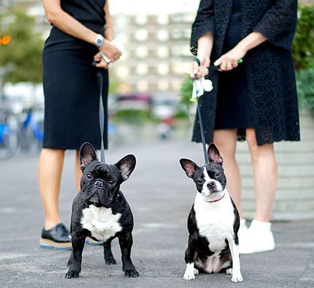 Em 2014, Friedman começou a viajar e já percorreu 30 cidades nos Estados Unidos e em outros países. Na foto acima, Mario e Gina, um buldogue francês e um boston terrier fotografados na Union Square de Nova York (Foto: The Dogist, LLC)