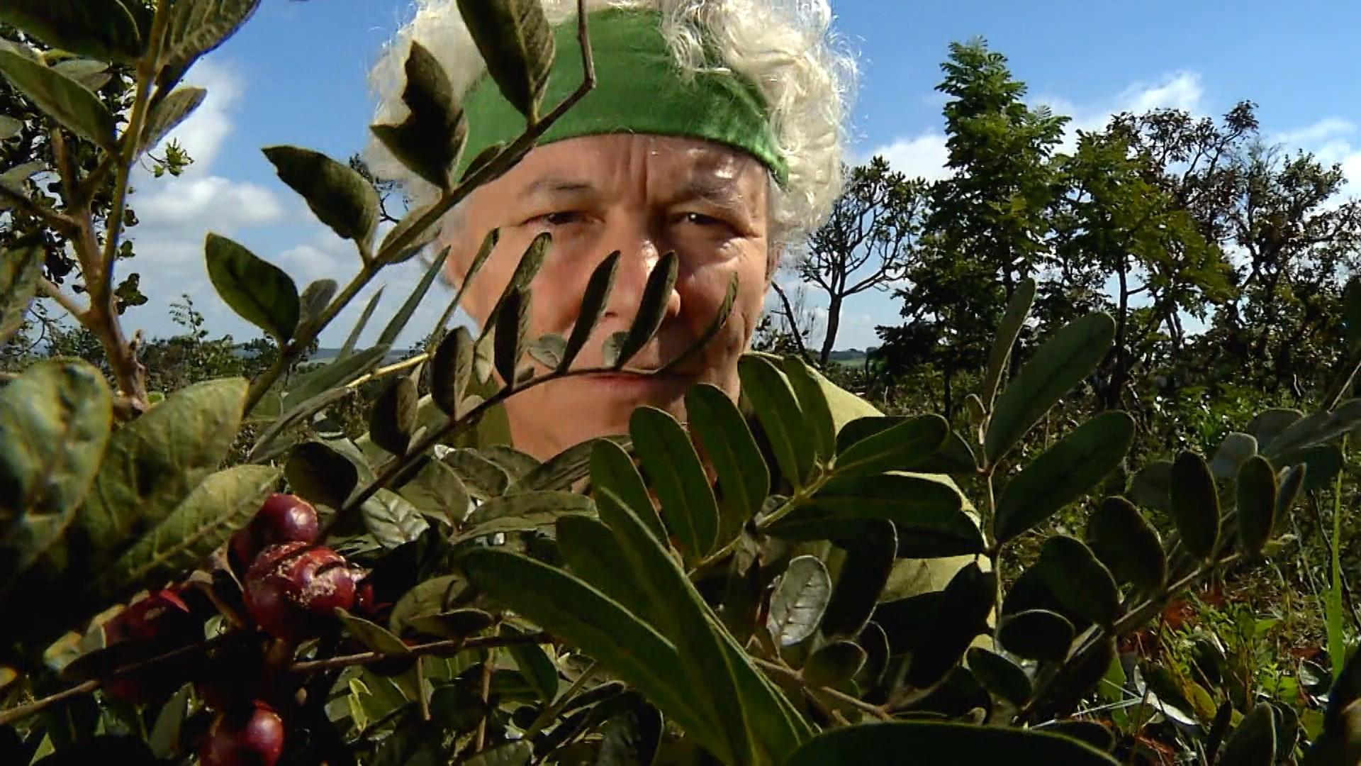 Espécies ameaçadas de extinção são transplantadas para a Reserva EcoCerrado do Brasil.  (Foto: Globo;)