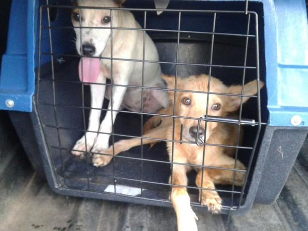 Daíza Mello adotou 14 cães na Zoonoses (Foto: Daíza Mello/Arquivo Pessoal)