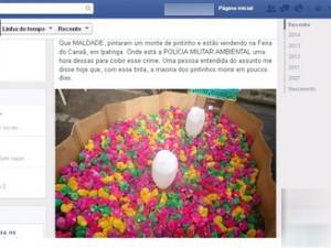 Venda de pintinhos em feira de Ipatinga é questionada nas redes sociais. (Foto: Reprodução / Facebook)