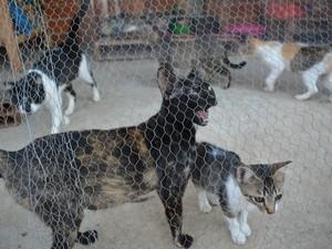 Gatos tem espaço especial em 'vilarejo para cães' mantido por idoso em Mogi das Cruzes (Foto: Jamile Santana/G1)