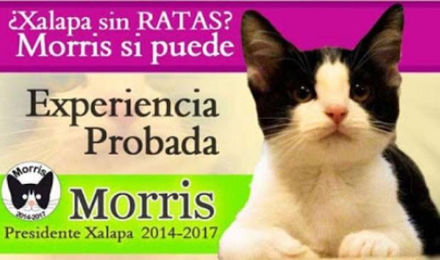 'Candigato' Morris teve nome lançado em Xalapa (Foto: Reprodução/YouTube/Michael Morales)