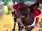 Panetone canino é aposta de fábrica para impulsionar faturamento do ano