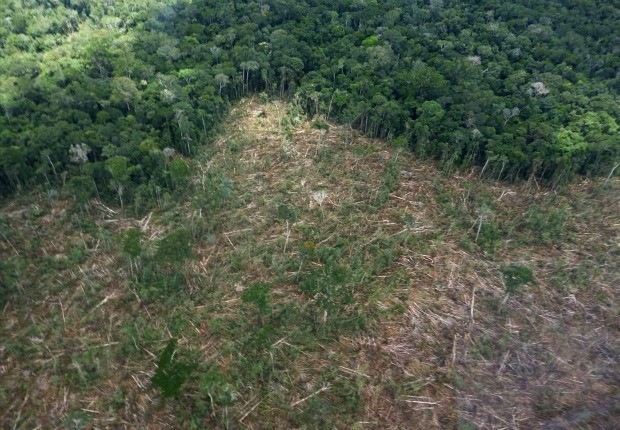 """""""Operação Soberania"""" combate desmatamento em cidades no Amazonas (Foto: Reprodução/Ibama)"""
