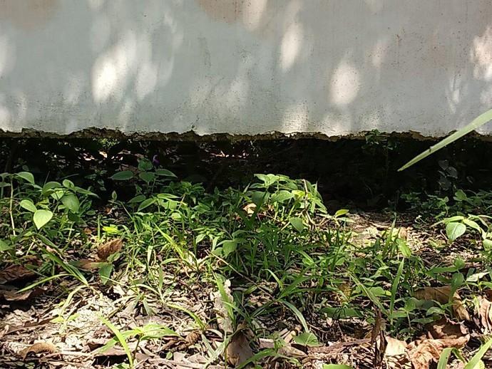 buraco Ninho (Foto: Fred Gomes/ Globoesporte.com)