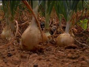 Queda nas vendas de cebola em Petrolina, PE (Foto: Reprodução/TV Grande Rio)