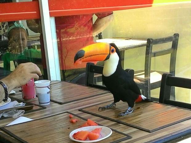 Tucano 'almoçou' ao lado do cliente em Sorocaba  (Foto: Márcia de Oliveira Brito/ Arquivo pessoal)