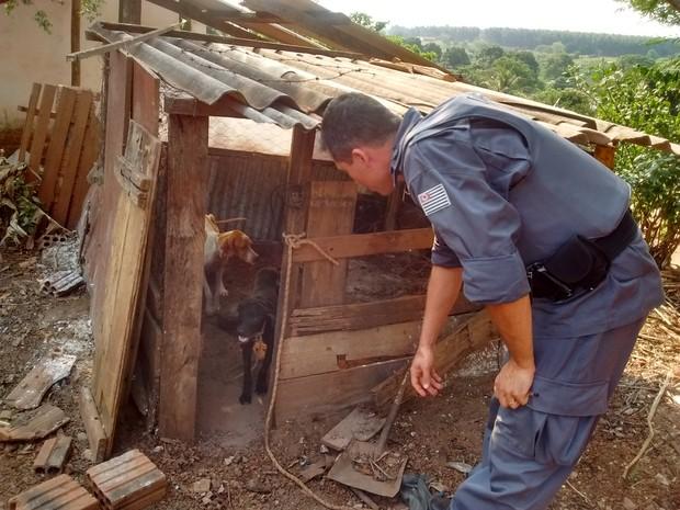 Cães estavam desidratados e foram encaminhados para uma ONG da cidade (Foto: Divulgação/Polícia Militar Ambiental)