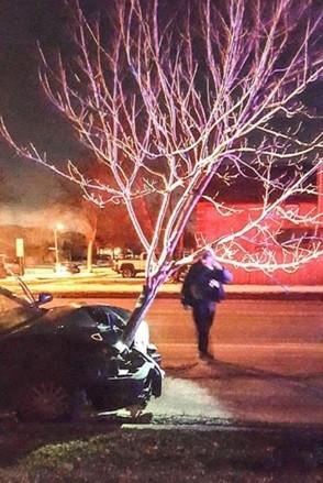 A motorista disse não se lembrar de como 'atropelou' a árvore