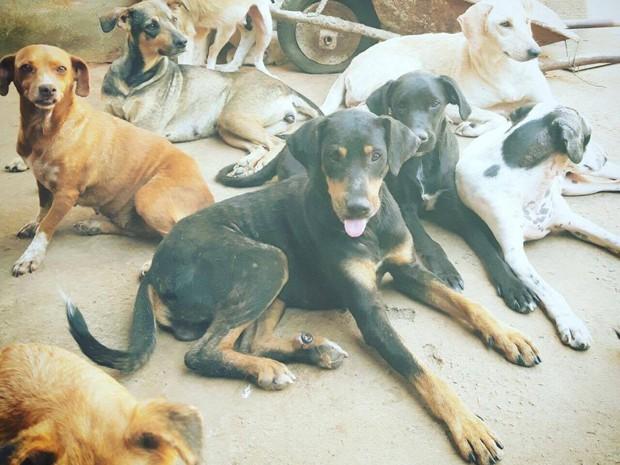 ONG Vida Animal - Divinópolis (Foto: Biazzy Soluções Publicitárias/Divulgação)