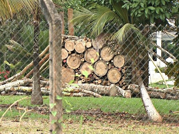 Área é de preservação permanente e precisa de autorização para a derrubada de árvores  (Foto: Reprodução/TV Acre)