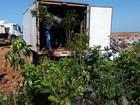 Cerca de 500 mudas de laranja e limão são destruídas em Palmas