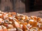 Clima e demanda firme mantêm preços dos milho em alta, diz Cepea