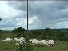 Fio de alta tensão cai em pasto e mata 19 vacas eletrocutadas em Goiás