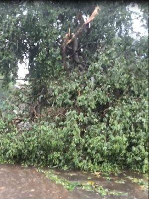 Árvore caída na Avenida Castelo Branco, em Várzea Grande (MT) (Foto: Eliane Neves/Arquivo pessoal)