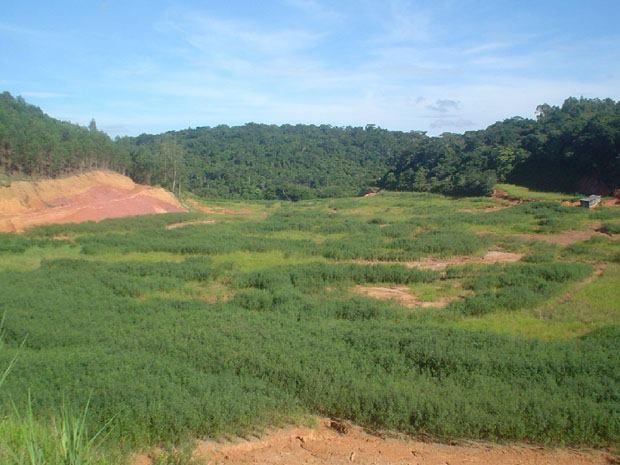 Acidente Cataguases 4ªFoto -  Lagoas revegetadas12/04/2013 (Foto: Cataguases de Papel/Arquivo Pessoal)