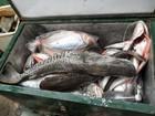 Balanço parcial aponta apreensão de 7 toneladas de peixe durante piracema