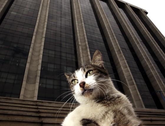 Gatos ao redor da prefeitura do Rio de Janeiro (Foto: Agencia Sincro)